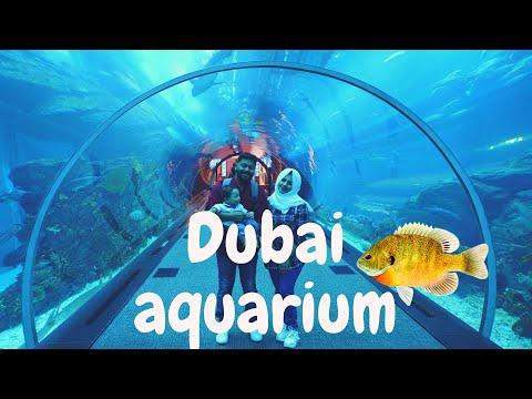 Riyadh to Dubai Part 3 – Regency Club Lounge, Dubai Aquarium & Underwater Zoo