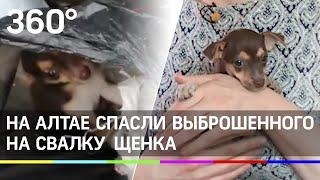 В Бийске спасли щенка выброшенного в мусор