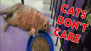 Cats Don't Care Funny Pets Videos of 2016 Compilation