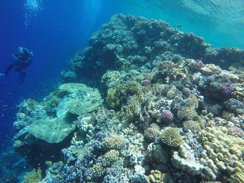 Diving Egypt Red Sea Sharm el Sheikh