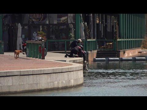 Il cane cade in acqua per seguire un cigno: i carabinieri lo salvano (e multano la padrona)