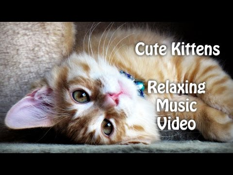 Cute Kittens for Babies - Sleeping Cats - Relaxing Music Video