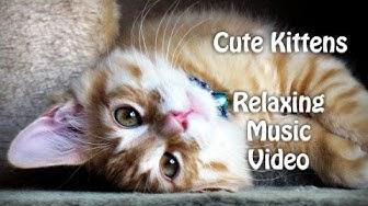 Cute Kittens for Babies - Sleeping Cats - Relaxing Music Video