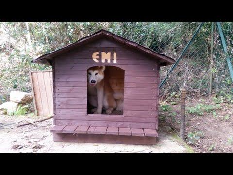 Cuccia per cani fai da te per taglia l tutta in legno for Cucce per gatti da esterno coibentate