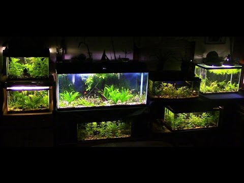 Betta Fish Room Tour