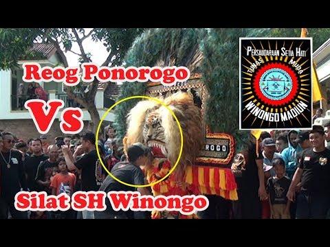 Reog Ponorogo | Bujang Ganong Lucu VS Silat SH Winongo