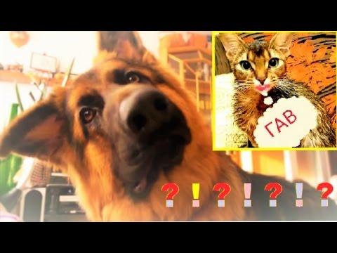 Самые популярные клички собак, список лучших кличек собак