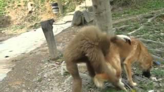 Monkey Dog cute  friendship ** must see**