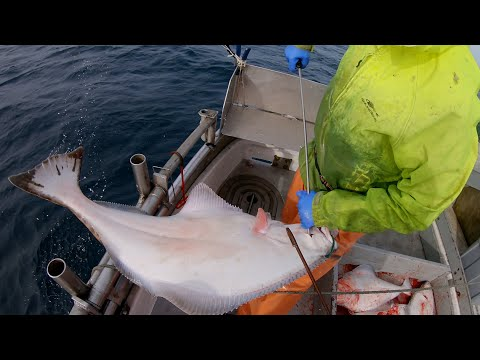 Alaska Halibut Fishing - Hauling The Gear!