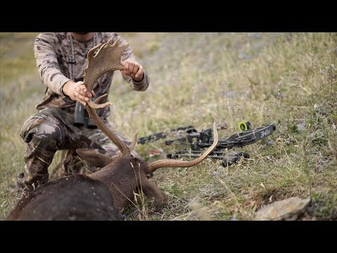 "S8:E11 ""TWO FOR ONE"" Archery Fallow Deer in New Zealand"