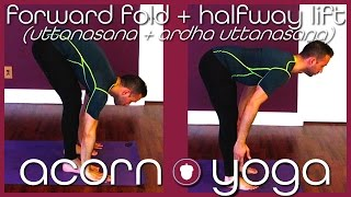 Sun Salutation (Episode 3): Forward Fold & Halfway Lift