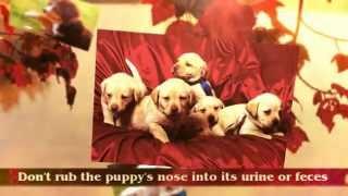 Beagle Puppy Training Tips | Puppy Potty Training Tips |  Rottweiler Puppy Training Tips | Crate