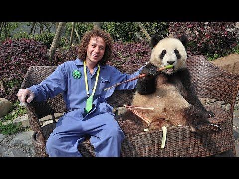 Un día trabajando en una RESERVA DE PANDAS!