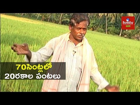 Natural Farming | Farmer Suryanarayana Raju Success Tips | hmtv Agri