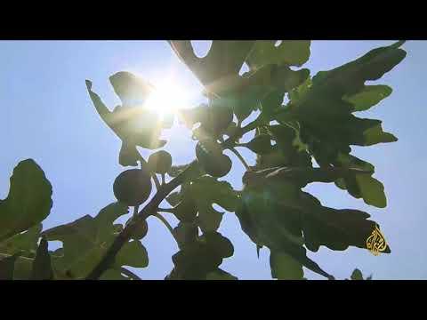 هذا الصباح- أصناف غير تقليدية للزراعة بالأردن  - نشر قبل 57 دقيقة