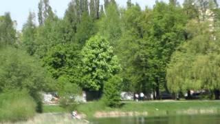 Калининград. Озеро Летнее в Балтрайоне(2011 05 11 0017., 2011-06-06T21:18:03.000Z)