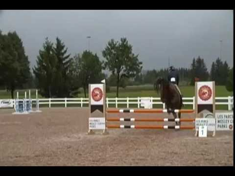 Cairo (Carpathia) at Fiddlers Green Jumper Show 0.9 metres