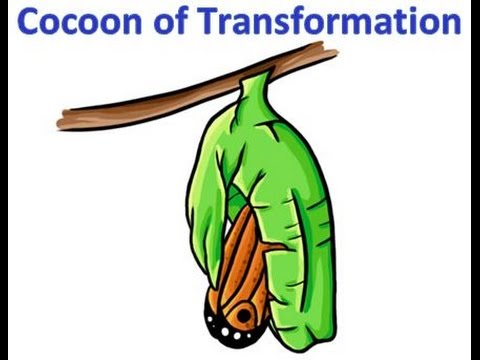 Cocoon of Transformation