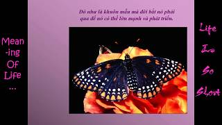 vuclip Meaning Of Life - Lessons From Butterflies - Try Your Best