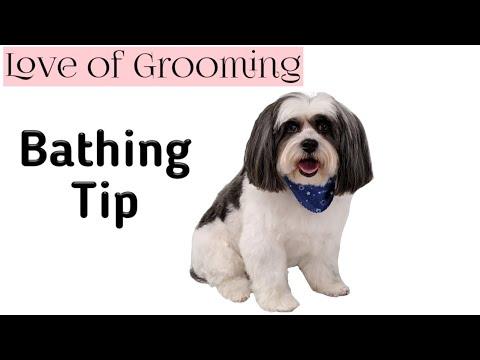 Dog Bathing Tip for Stressed Dogs |  Time Saving Dog Bathing Tip