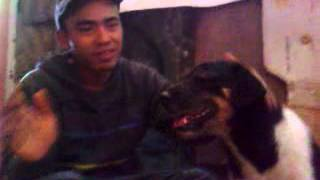 Download Video asan perkosa anjing MP3 3GP MP4