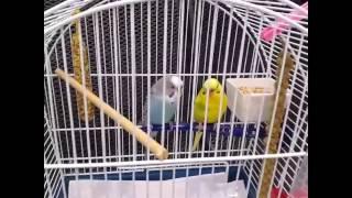 Ветеринарные клиники Германии. Сколько стоит посещение врача. Болезни волнистых попугайчиков.