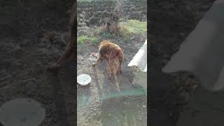 Собака ест свои ноги!!