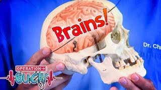 Your Big, Brilliant Brain!    Full Episodes   Operation Ouch