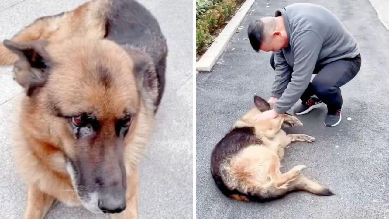 Depois De Se Reencontrar Com O Treinador, Que Não Via Há Anos, Cachorra Policial Veterana Chora