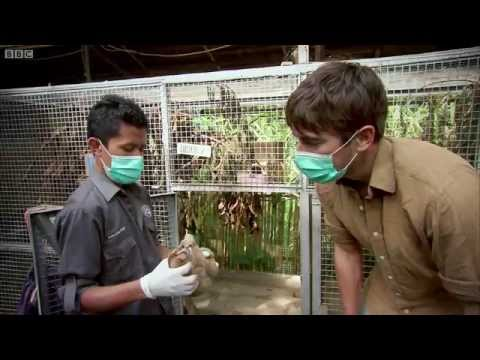 Shocking Undercover Scenes: Illegal Animal Trade - Indian Oc
