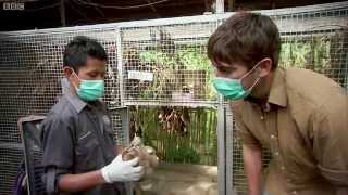 Shocking Undercover Scenes: Illegal Animal Trade - Indian Ocean With Simon Reeve - BBC
