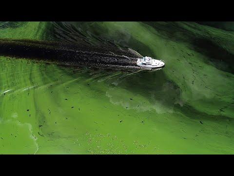 Fear grows as Lake Okeechobee faces toxic algae bloom