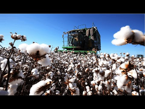 How Cotton Processing