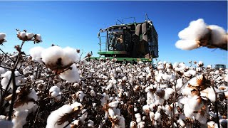 How Cotton Processing in Factory, Cotton Cultivation - Cotton Farming and Harvest