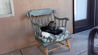 Making a Cat Bed out of old Rocking Chair