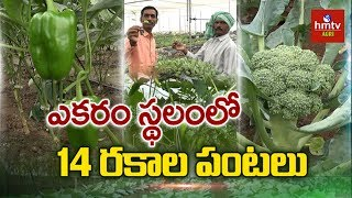 14 Crops In 1 ACRE | MBA To Farmer | Broccoli, European Cucumber, Red Cabbage Cultivation |hmtv Agri