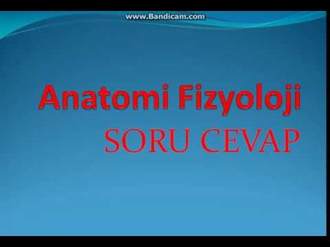 Sorular - Anatomi - Fizyoloji - 5