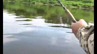 Ловля сомов на реках Беларуси