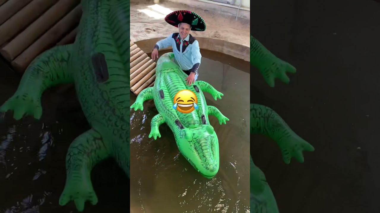 Alligator Cinco de Mayo 🇲🇽 Pool Party 🎉 #Shorts
