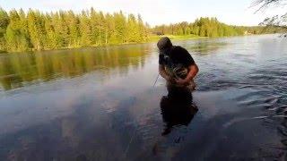 Flyfishing Rena 2015. Dryfly fishing Norway.