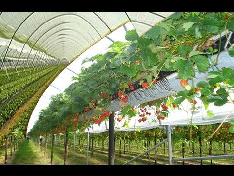 ADVANCE AGRICULTURE | AGRICULTURE IN ISRAEL | HI TECH AGRICULTURE IN INDIA