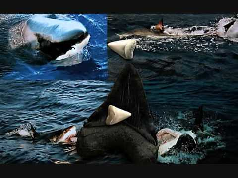 all about sharks seven paragraphs Shark facts • interesting information.