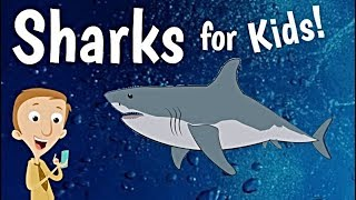 Sharks for Kids | Animal Learning Videos