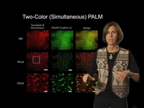 Jennifer Lippincott-Schwartz (NIH) Part 3: Super Resolution Imaging