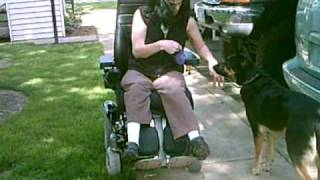 Introducing Power Chair To Service Dog