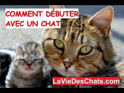 5 Astuces Pour Bien Débuter Avec Un Chat 🐱