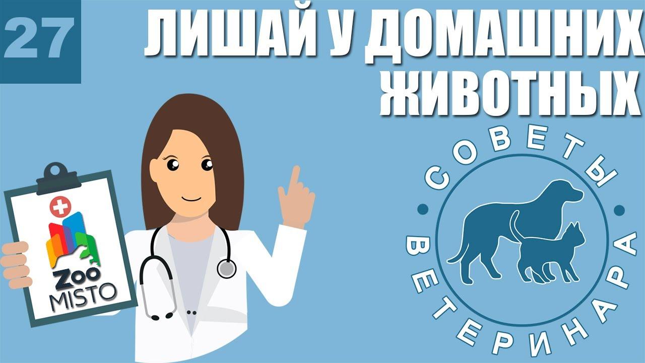 Лишай у домашних животных | Признаки и лечение Лишая ...