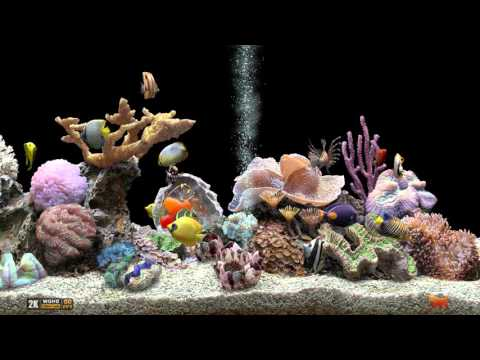 ★ Marine Aquarium ★ UHD Screensaver ★ Black Ocean ★ 60fps ★