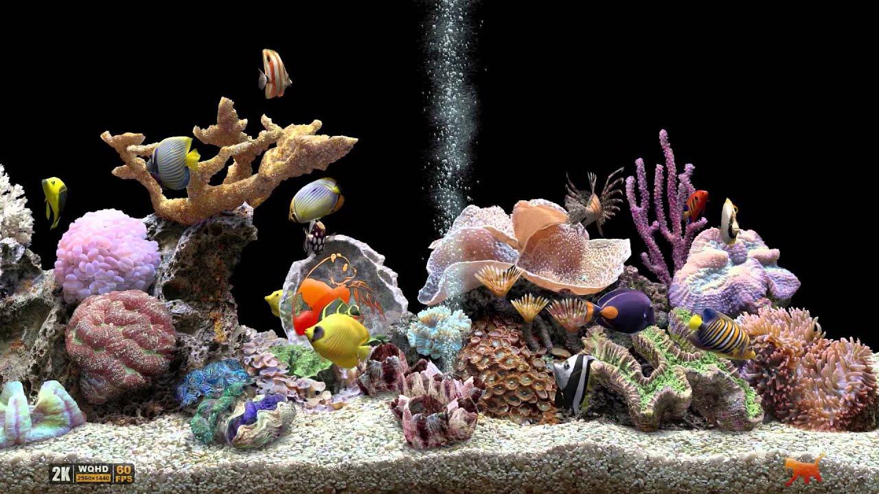 Игровой автомат aquarium hd 2 кибер онлайн вулкан
