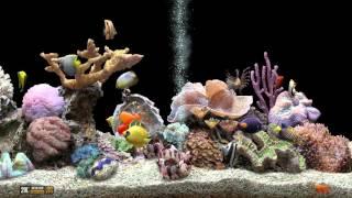 ★ Marine Aquarium ★ UHD Screensaver ★ Black Ocean ★ 60fps ★